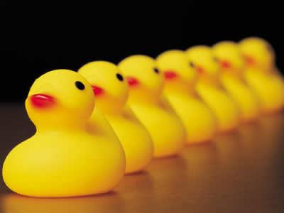 Megan Dredge - Ducks In A Row